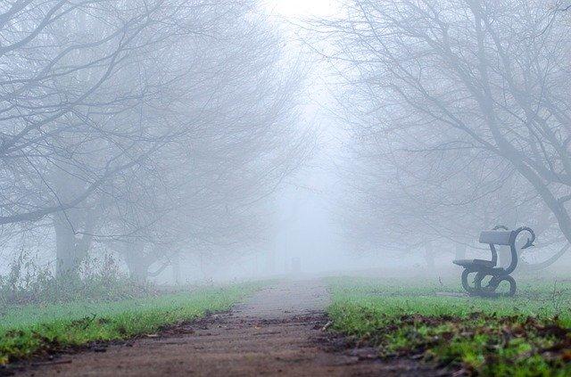 Tree Trees Fog Weather Seasons