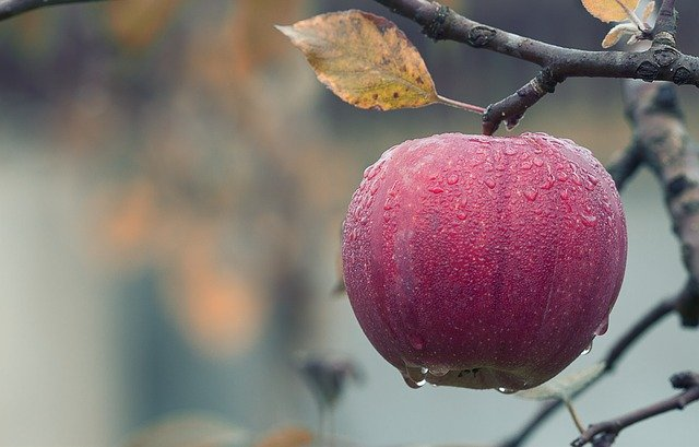 Apple Fall Juicy Food Autumn  - mploscar / Pixabay