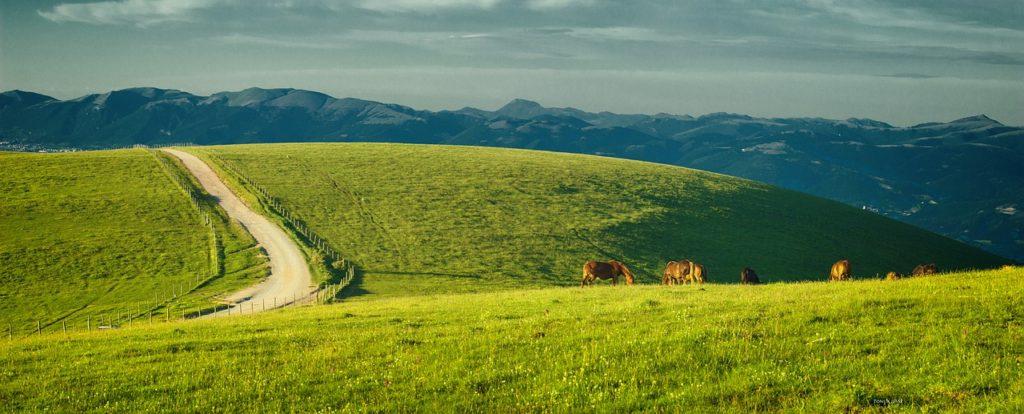Umbria Italy Monte Subasio Horses  - tonixjesse / Pixabay