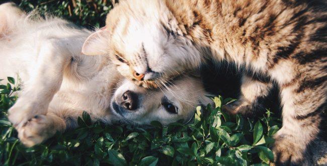 Friends Cat And Dog Pets Cat Dog  - Free-Photos / Pixabay
